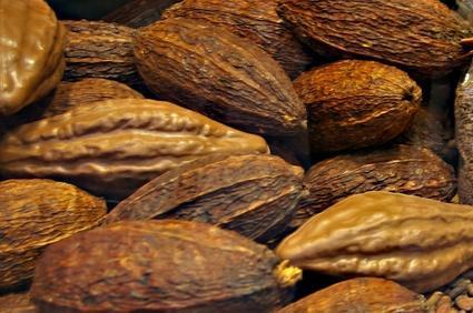 kakaobohne-schokolade.JPG
