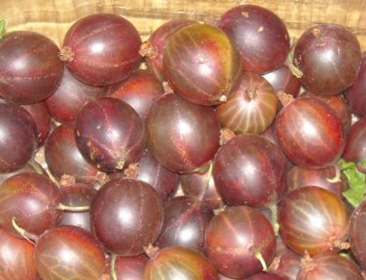 Stachelbeeren, leicht säuerlich-herber Genuss
