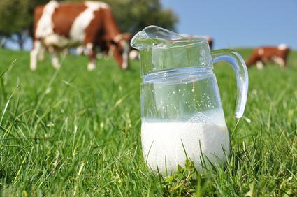 Gesunder Trinkgenuss mit 12 Rezepten rund um Milch