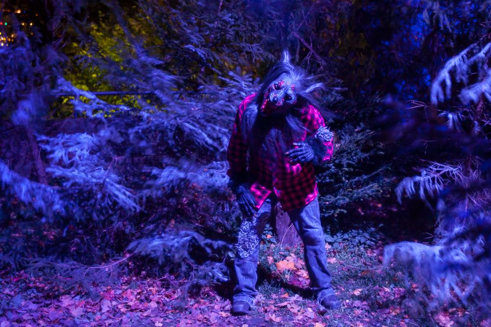 der böse Wolf auf Burg Frankenstein